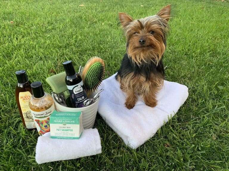Max standing with his Yorkie grooming tools
