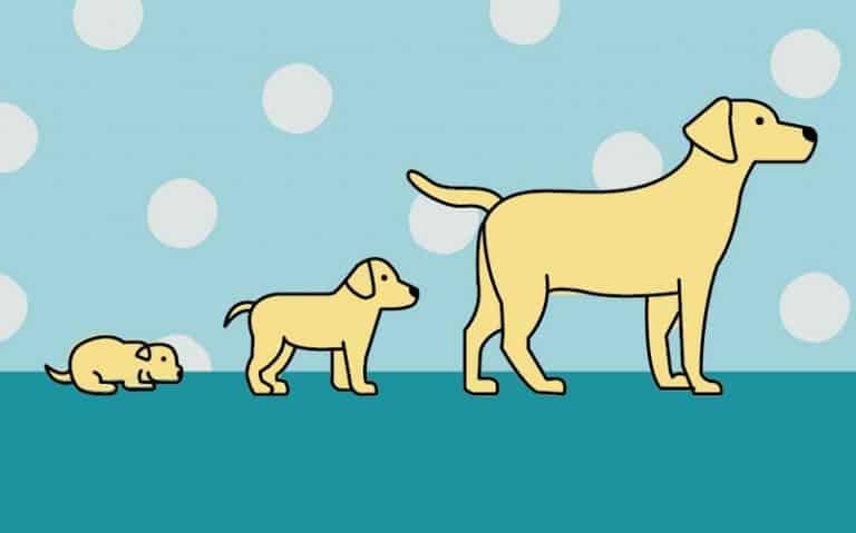 Dog Developmental Stages