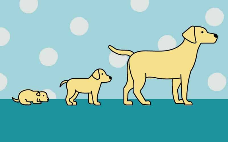 Dog Developmental Stages