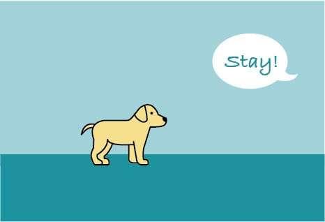 Dog Developmental Stages: Human Socialization Stage