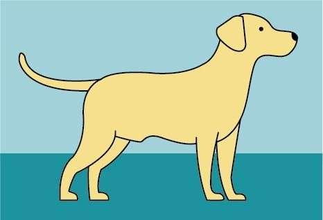 Dog Developmental Stages: Maturity Stage
