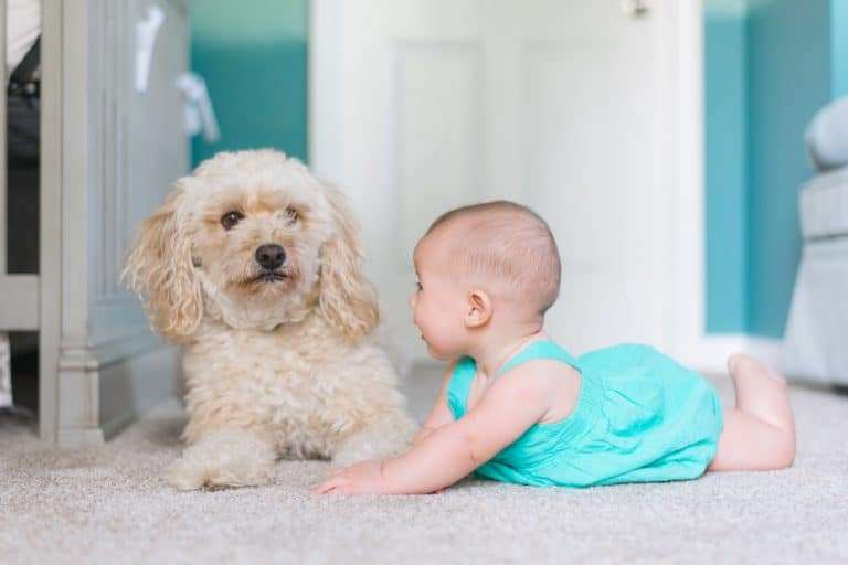 Image of a baby and a dog. Is it safe to use baby wipes on dogs?