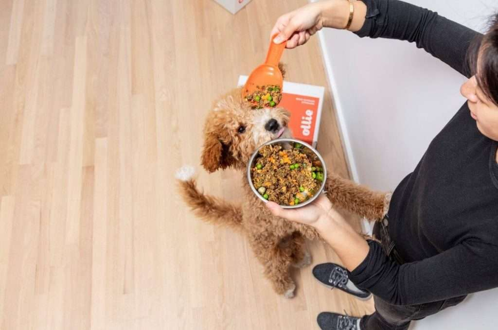 how-much-is-ollie-dog-food