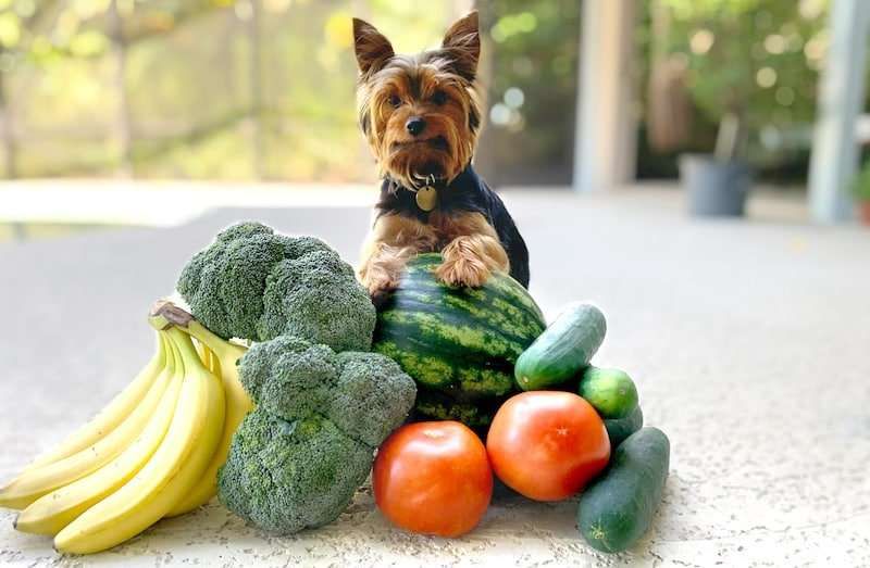 Max the Yorkie sitting next to human foods