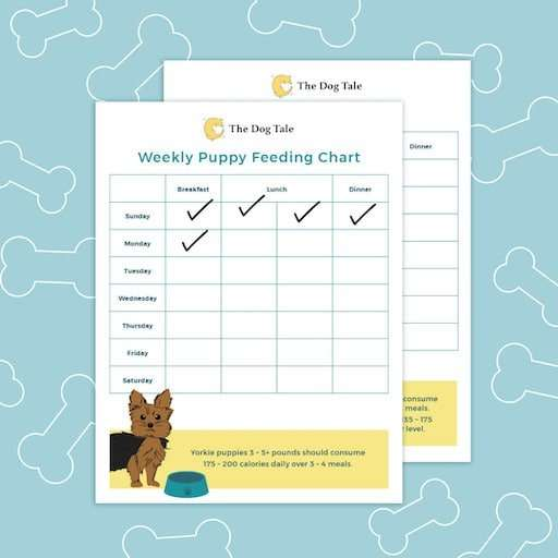 Download this Yorkie puppy feeding schedule to track your dog's meals