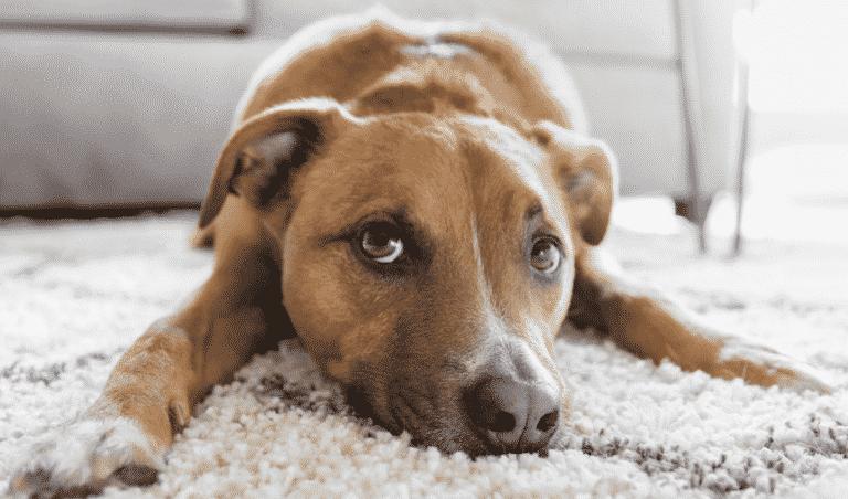Pumpkin Pet Insurance Review