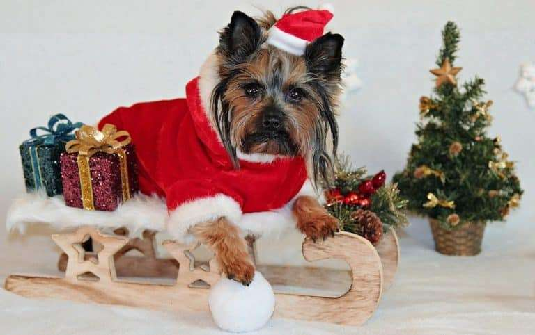 Learn about your favorite Yorkie Stuff & Gifts