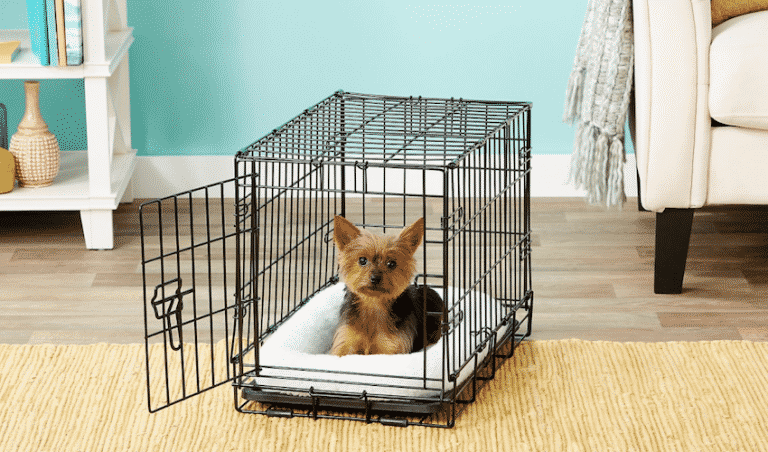 Crate Training a Yorkie Puppy