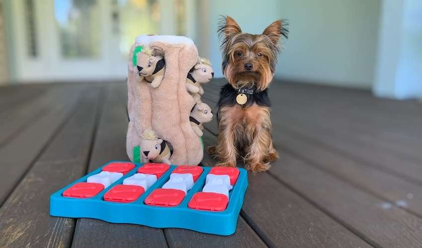 Max the Yorkie with his favorite dog toys