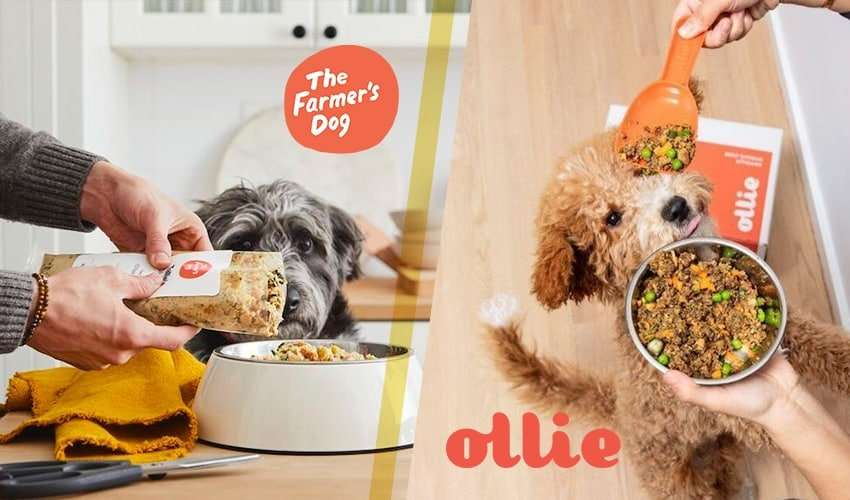 Watch us compare The Farmer's Dog vs Ollie