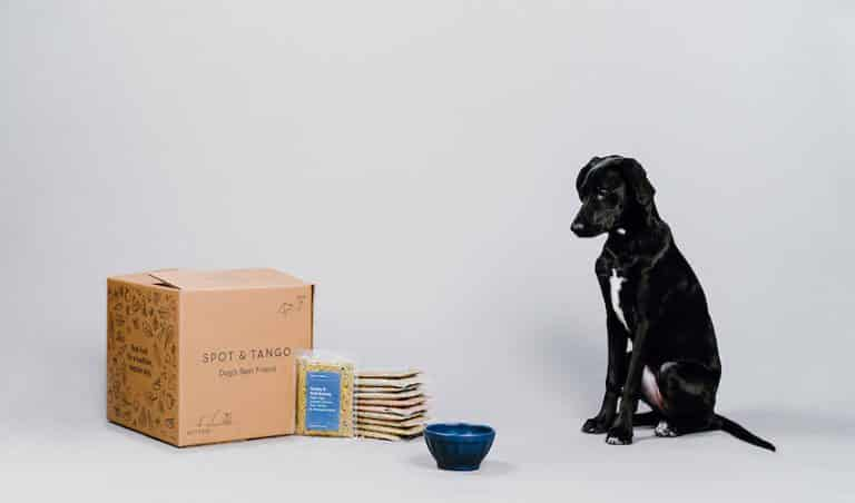 A dog patiently waits for his Spot & Tango dog food
