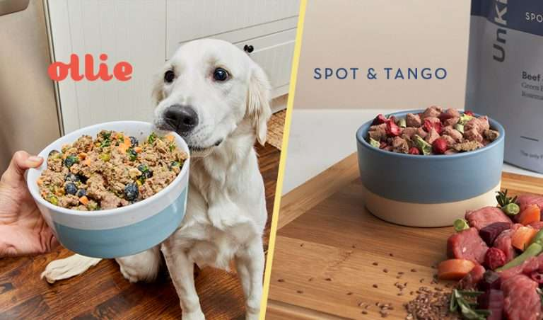 A photo of a dog eating Ollie vs a dog eating Spot and Tango